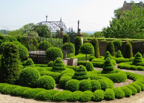 Complex box topiary at Bourton House, Cotswolds.
