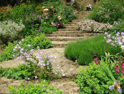 Planting with tree peony, flock and gladioli on each side of the path at the base of the 50 foot high cliff in Kiftsgate Court.