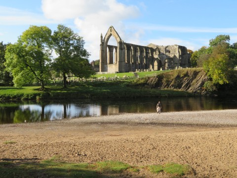 A view of the ruins of Bolton Priory beside the River Wharfe, Yorkshire, UK